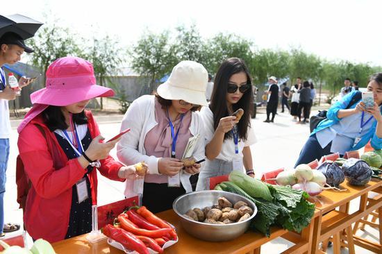 新鲜蔬菜展示。