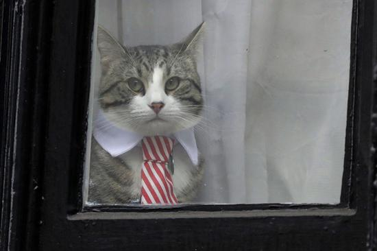 """阿桑奇的""""使馆猫"""" @东方IC"""