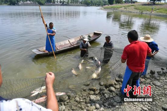一条条大鱼被捕捞上岸。 张浪 摄