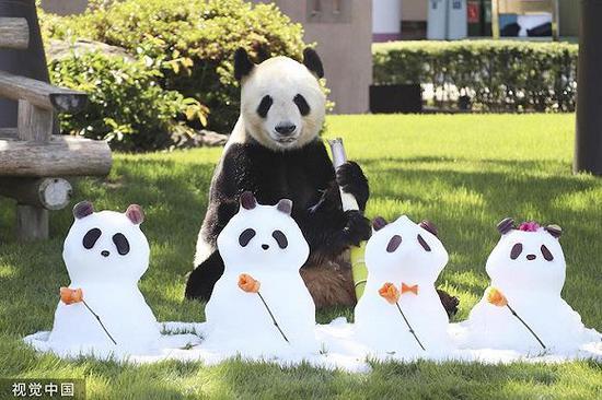 """2019年6月16日,日本战歌山县黑浜町的植物园""""冒险天下""""为年夜熊猫""""永明""""庆贺女亲节。永明曾经具有15个熊猫宝宝,园圆称""""繁衍才能如斯下的雄性熊猫天下少有""""。图片滥觞:视觉中国"""