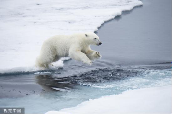 北极熊侵袭俄罗斯村庄 气候变化是原罪?bet356体育在