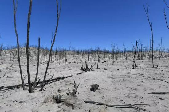▲这是1月7日在澳大利亚袋鼠岛拍摄的林火过后的景象。(新华社/欧新)