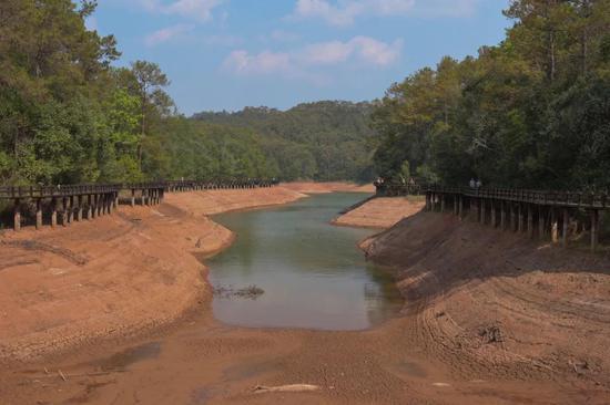 干旱!普洱水库见底 西双版纳部分早稻推后种植图片