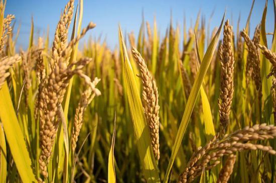 """多国禁止粮食出口,中国会不会出现""""粮荒""""?图片"""