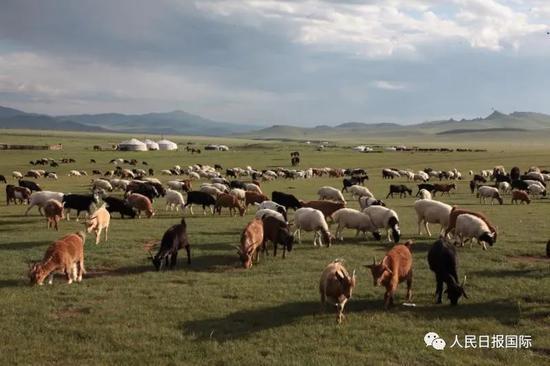 蒙古国赠送的3万只羊什么时候赶过来?确切消息来了图片