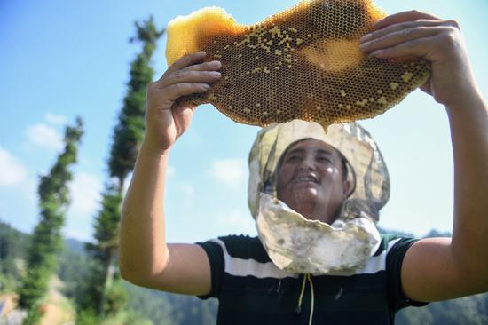 △十八洞村村民龙先兰进修养蜂手艺,随机应变生长养蜂家当,渐渐成为养蜂大户,还劳绩了甜美的恋爱。