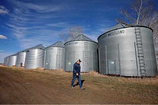 2019年4月12日,一位加拿大阿尔伯塔(Alberta)省从事油菜籽种植的农民巡查油菜籽存储仓。