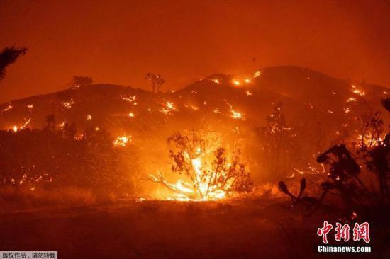 """一片火海!美国加州""""酒乡""""遭遇大火 千亩土地被毁"""
