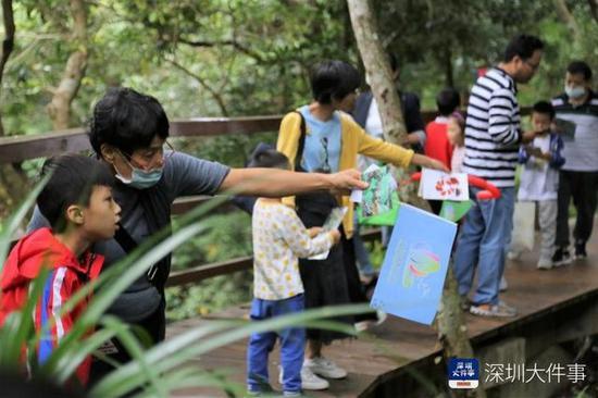 20多个打卡点亲近大自然 深圳盐田举行森林溪流自然嘉年华图片