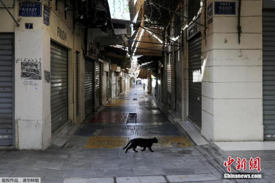 总统养猫总理养狗,开设收容所 希腊这样保护动物