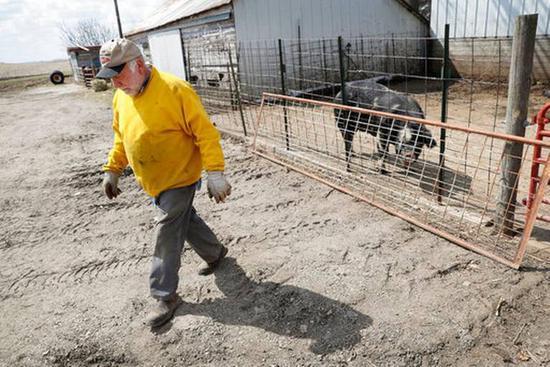 现在,每头上市的生猪将给养猪户带来约37美元的丧失。图据《国度报》
