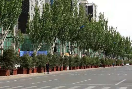"""地方""""拍脑门""""造绿欠下巨债 企业垫资种树被拖垮图片"""