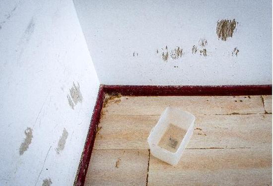 房东将婚房出租收房时傻眼:屋里到处是狗粪狗毛