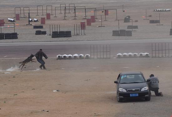 警犬穿越炸点扑咬嫌疑人。 摄影 新京报记者 吴宁