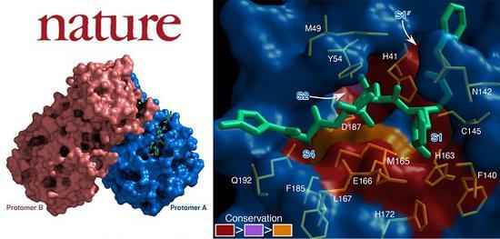 """中国攻关联盟解析新冠""""要害"""",筛选出多种病毒抑制小分子图片"""