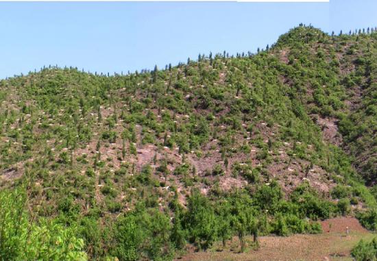 北京治理风沙源:将封山育林25万亩图片