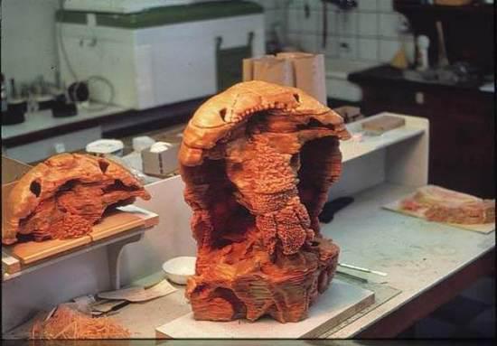 张弥曼用连续磨片及蜡制模型的方法制成的杨氏鱼化石等比例放大标本。