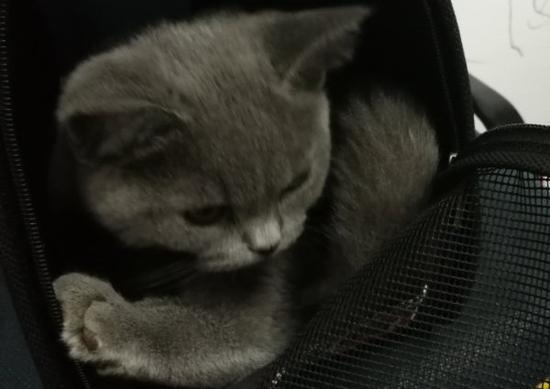 带回家的女网友是惯偷 家里的名猫和财物被盗走