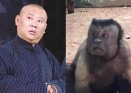 这只猴子长了张人脸 网友:身体里住着人类的灵魂