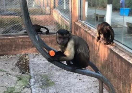 猴子长人脸 未命名 热图7