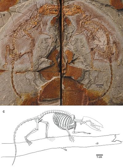 周氏混元兽的正型标本。 本版图片/受访者供图