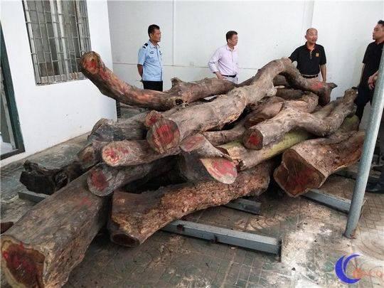 被砍伐后保管起来的木材