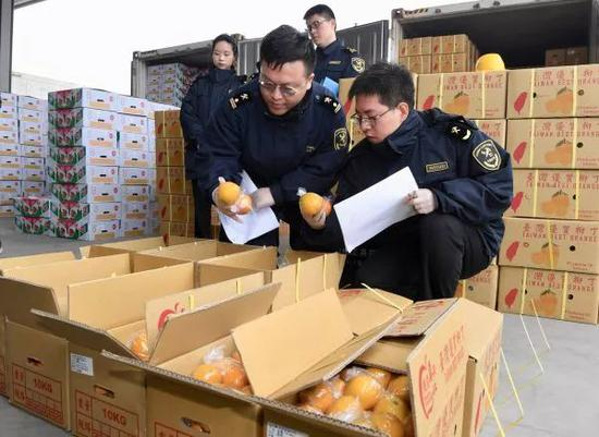 ▲1月20日,福建平潭港區海關人員在檢查剛剛抵達的臺灣水果。(新華社)