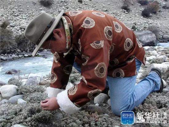 ↑这是钟扬在西藏户外采集种子(资料照片)。新华社发