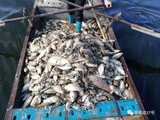 江苏泗洪县鱼蟹大量死亡 受损养殖面