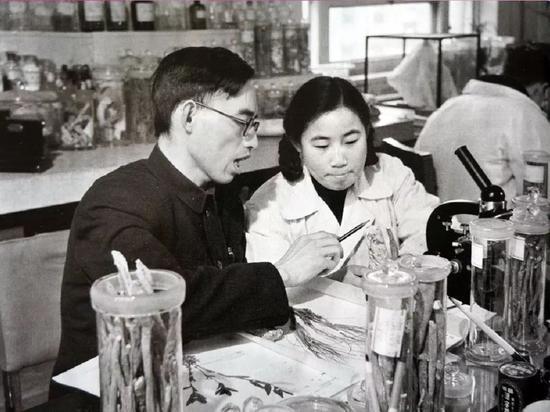 △20世紀50年代,在中醫研究院中藥研究所任實習研究員的屠呦呦與老師樓之岑(左)一起研究中藥。