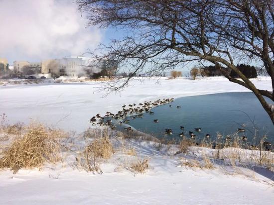 美国芝加哥的湖面附近冒着冷气。叶新筠 摄