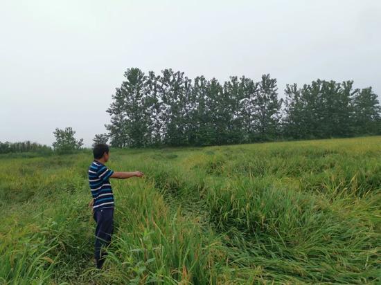 惊心动魄!每一年丧失掉一个四川省的食粮产量