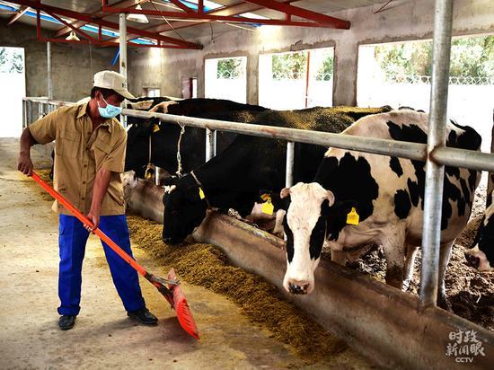 △新疆喀什莎车县生长奶牛养殖、奶成品加工等扶贫家当。