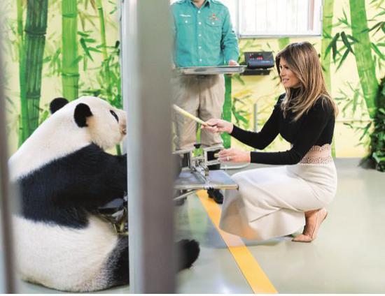 2017年11月10日,美國總統川普訪問中國期間,梅拉尼婭參觀北京動物園熊貓館。圖/視覺中國