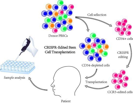 基因编辑的造血干细胞移植流程图。
