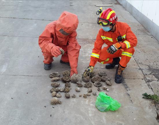 头皮发麻!消防员耗时2小时 摘下了48个马蜂窝