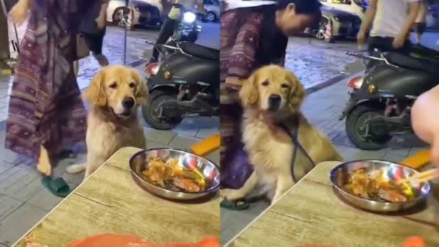 狗子路过大排档馋得走不动路:眼巴巴盯着饭菜 主人拽到拖鞋甩飞