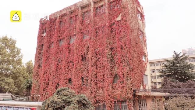 西安理工一教学楼30年爬满爬山虎  学生拍照记录它的春夏秋冬