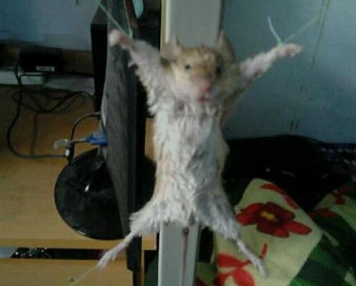 """大妈抓到老鼠后绑起来当犯人""""审问"""""""