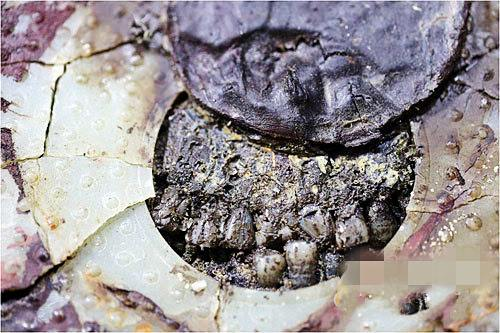 资料图:海昏侯墓主棺中刘贺的牙齿。