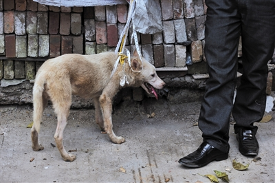 玉林大市场,一名男子拉着一条待售的狗等待买主。