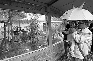 游客冒雨来看熊猫