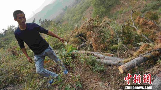 河北抚宁大片国家公益林被毁 村民借此套取补贴 社会 第2张