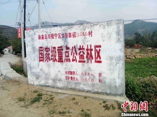 河北抚宁大片国家公益林被毁 村民借此套取补贴 新闻 第1张
