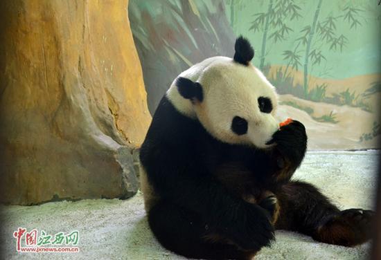 wars panda bear - photo #8