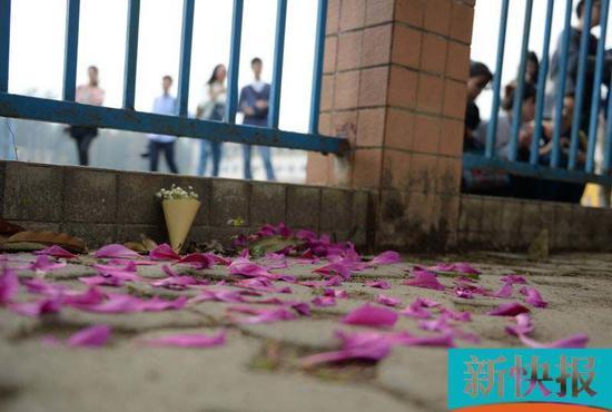 现场有同学将花瓣摆成心形寄托哀思。新快报记者 孙毅 / 摄