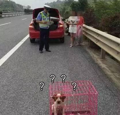 """狗狗一副生无可恋的模样:""""本来你是如许的客人""""......"""