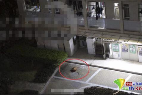 事发当晚漂泊狗被从三楼窗口扔出(微博截图)