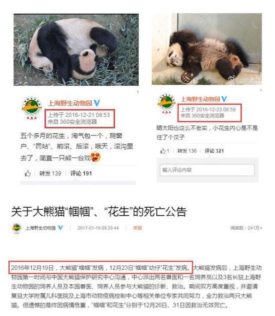 """上野园公告称""""2016年12月19日 帼帼 发病,12月23日 花生 发病。""""但其微博在2016年12月21日仍发布了帼帼与花生的微博、23日仍发布了花生的微博。(微博截图)"""