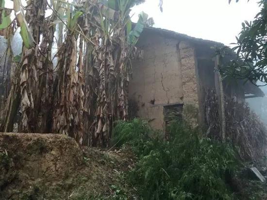 马泮艳家倒掉的老屋如今已长满芭蕉树。
